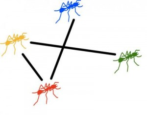 Ant interactions