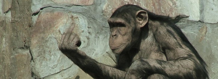 Chimp Nonverbal Communication with Hand Signal